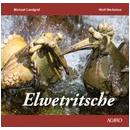 Elwetritsche